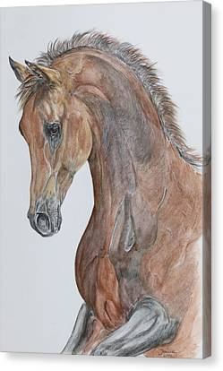 Another  Arabian Horse Canvas Print by Janina  Suuronen
