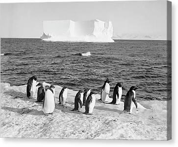 Antarctic Penguins And Iceberg Canvas Print by Scott Polar Research Institute