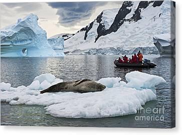 Antarctic Serenity... Canvas Print by Nina Stavlund