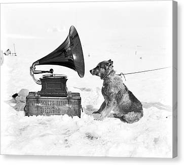 Antarctic Sled Dog And Gramophone Canvas Print by Scott Polar Research Institute