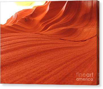 Antelope 13 Canvas Print by Deniece Platt