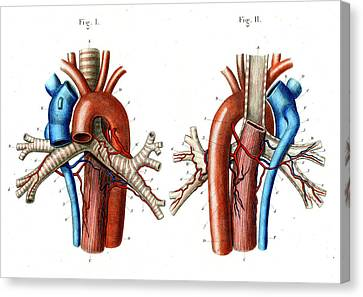Aortic Arch Canvas Print by Collection Abecasis