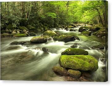 Appalachian Spring Stream Canvas Print by Phyllis Peterson