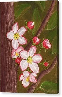 Apple Blossom Canvas Print by Anastasiya Malakhova