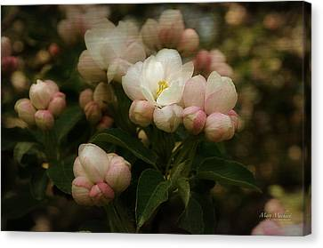 Apple Blossom Time Canvas Print by Mary Machare