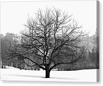 Apple Tree In Winter Canvas Print by Elena Elisseeva