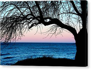 Apple Tree Sunset Canvas Print by Heather Allen