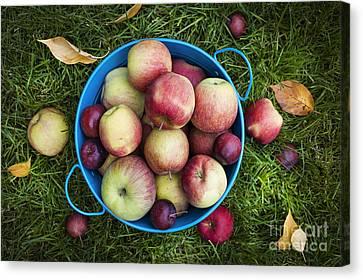 Apples Canvas Print by Elena Elisseeva