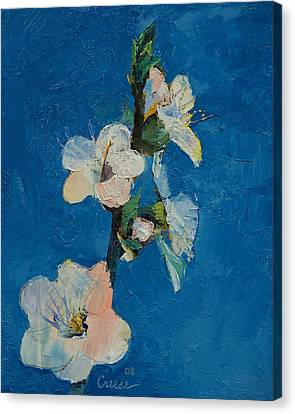 Apricot Blossom Canvas Print by Michael Creese