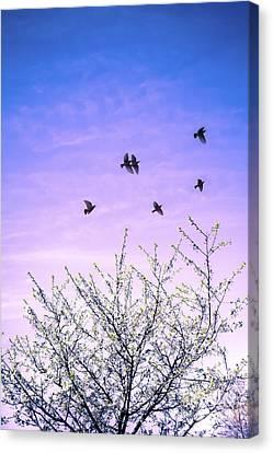 April Dawn Canvas Print by Jan Bickerton