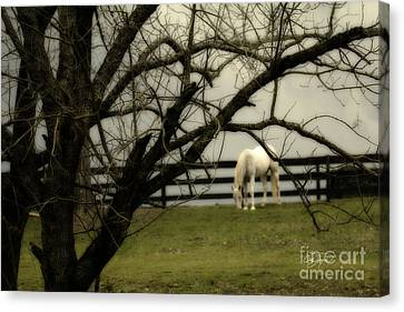 April Showers Canvas Print by Cris Hayes