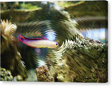 Aquarium Art 25 Canvas Print by Steve Ohlsen