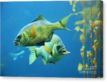 Aquarium Canvas Print by Tap  On Photo
