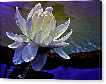 Aquatic Beauty In White Canvas Print by Julie Palencia