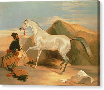 Arab Stallion Canvas Print by Sir Edwin Landseer