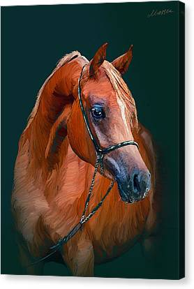 Arabian Horse Canvas Print by Marina Likholat