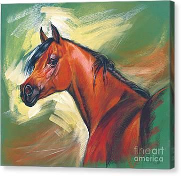 Arabian Horse Canvas Print by Zorina Baldescu