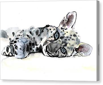 Arabian Leopard Cub Canvas Print by Mark Adlington