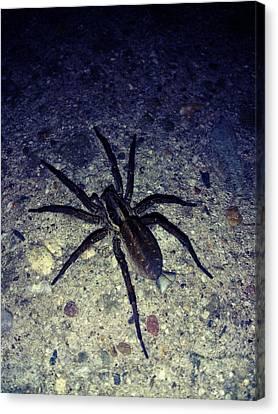 Arachne Canvas Print by Lucy D