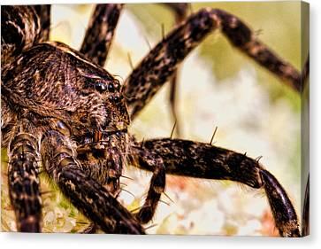 Arachnophobia Canvas Print by Bob Orsillo