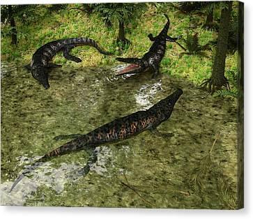 Archegosaurus Amphibians Canvas Print by Walter Myers