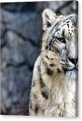 Are You Talking To Me Canvas Print by Angelina Vick