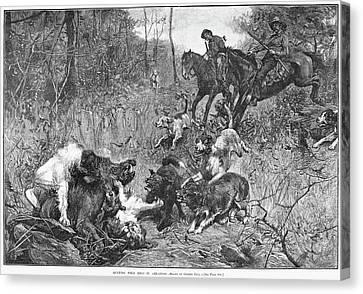 Arkansas Boar Hunt, 1887 Canvas Print by Granger