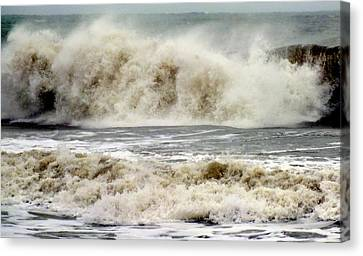 Arrival Of Sandy Canvas Print by Karen Wiles
