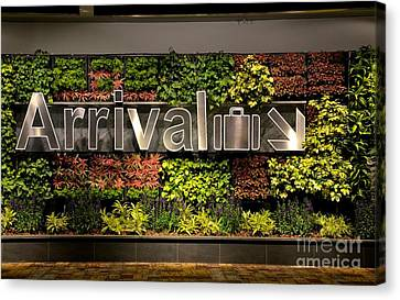 Arrival Sign Arrow And Flowers At Singapore Changi Airport Canvas Print by Imran Ahmed