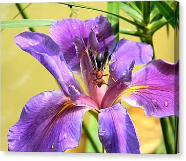 Artistic Purple Iris And Wasp Canvas Print by Warren Thompson