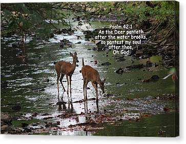 As The Deer Pants For Water Canvas Print by Lorna Rogers Photography