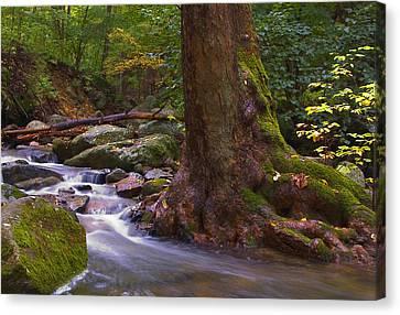 As The River Runs Canvas Print by Karol Livote