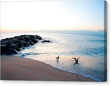 Asbury Seagulls Canvas Print by Jon Emery