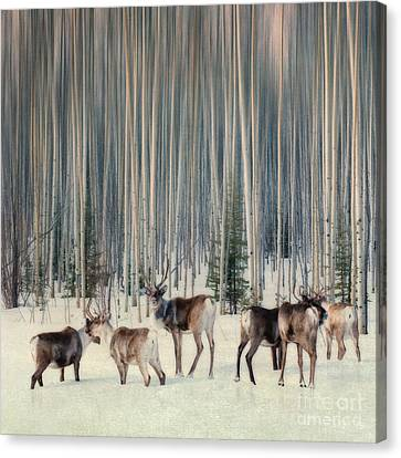 Caribou And Trees Canvas Print by Priska Wettstein