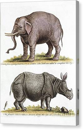 Asian Elephant And Rhino, 18th Century Canvas Print by Natural History Museum, London