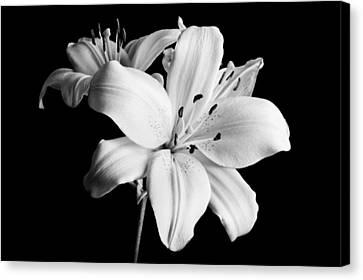 Asian Lilies 1 Canvas Print by Sebastian Musial