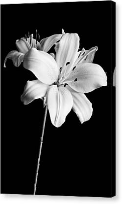 Asian Lilies 2 Canvas Print by Sebastian Musial