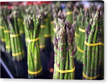 Asparagus Canvas Print by Tanya Harrison