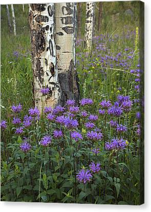 Aspen And Wildflowers Canvas Print by Gary Langley