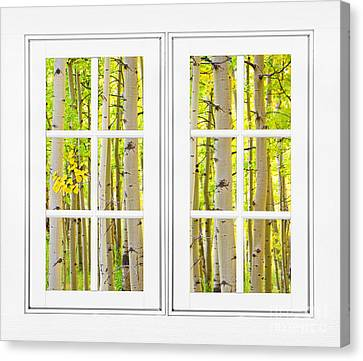 Aspen Forest White Picture Window Frame View Canvas Print by James BO  Insogna