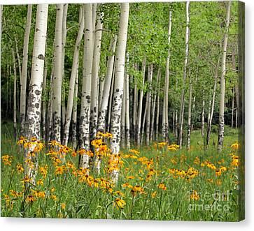 Aspen Grove And Wildflower Meadow Canvas Print by Matt Tilghman