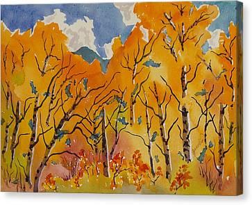 Aspen In Orange Steamboat Springs Colorado Canvas Print by Zanobia Shalks