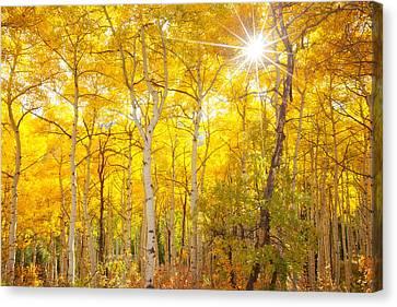 Aspen Morning Canvas Print by Darren  White