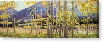 Panorama View Of Aspen Trees Canvas Print by Gary Kim
