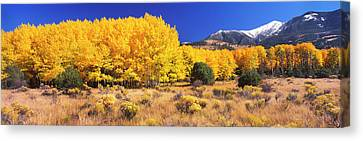 Aspen Tree With Sangre De Cristo Canvas Print by Panoramic Images