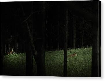At Play In Darkened Woods Canvas Print by Shane Holsclaw