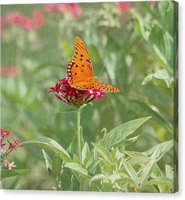 At Rest - Gulf Fritillary Butterfly Canvas Print by Kim Hojnacki