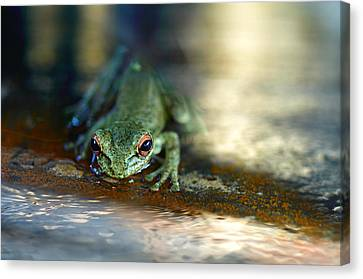 At Swim One Frog Canvas Print by Laura Fasulo