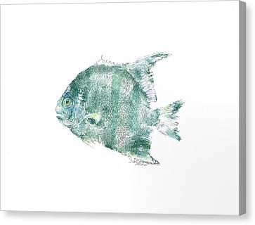 Atlantic Spadefish Canvas Print by Nancy Gorr
