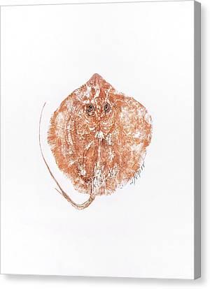 Atlantic Stingray Canvas Print by Nancy Gorr